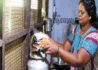 'ഹൽവ പോലെ അലിഞ്ഞിറങ്ങുന്ന ഇഡ്ലി, കൂട്ടിന് ചമ്മന്തിപ്പൊടി'; രാമശേരിയിലെ ദോശഡ്ലി വേറെ ലെവലാണ്