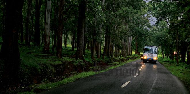 മാനന്തവാടിയിൽ നിന്ന് തിരുനെല്ലിയിലേക്ക് കാനന വഴിയിലൂടെ... മനോഹര കാഴ്ചകളൊരുക്കി 32 കിലോമീറ്റർ ബസ് യാത്ര!