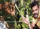 വേണമെങ്കിൽ പച്ചക്കറി 'മണലിലും' കായ്ക്കും; ദുബായിലെ മണലാരണ്യത്തിൽ പച്ചക്കറി വിളയിച്ച പ്രവീണിന്റെ കഥ!