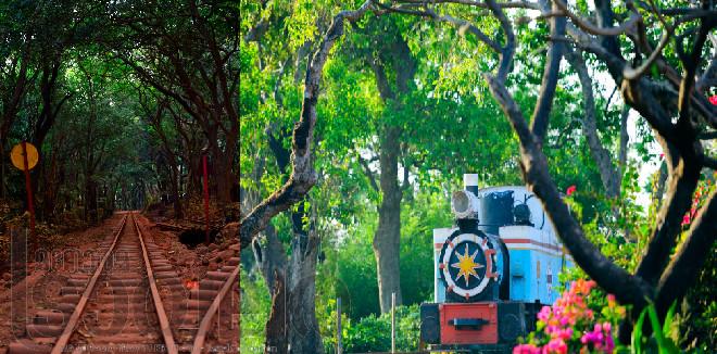 മുംബൈയ്ക്ക് തൊട്ടടുത്തുള്ള  ശാന്തസുന്ദരമായ ഭൂപ്രദേശം, പർവതനെറ്റിയിലെ വനം