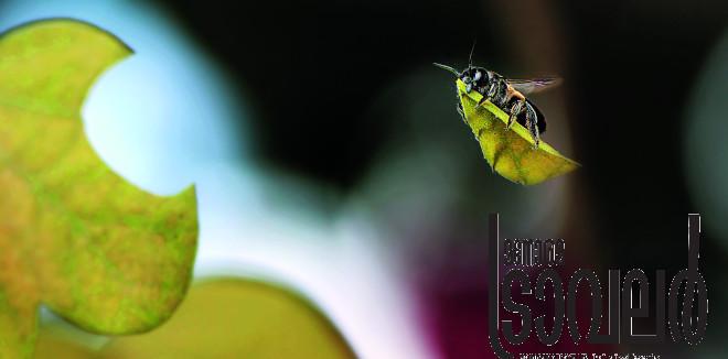 വൈൽഡ്ലൈഫ് ഫൊട്ടോഗ്രഫി മത്സരത്തിൽ തേനീച്ചയുടെ ചിത്രത്തിന് സമ്മാനം ലഭിച്ചപ്പോൾ നെറ്റി ചുളിച്ച മലയാളികൾ ഒട്ടേറെ